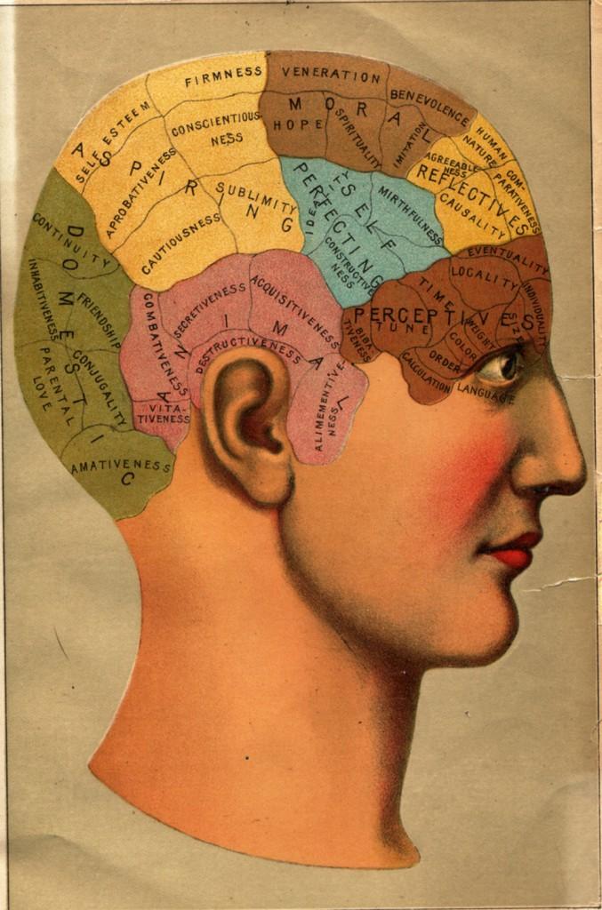 Laboratoire - le cerveau
